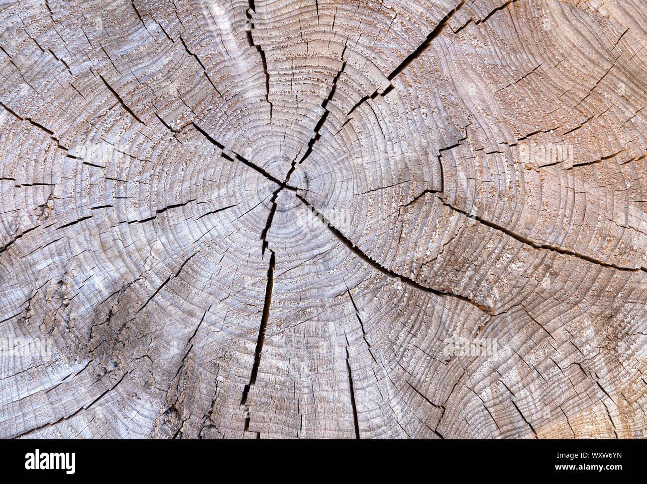dendrochronologie o arbre bague datant perdre du poids début datant