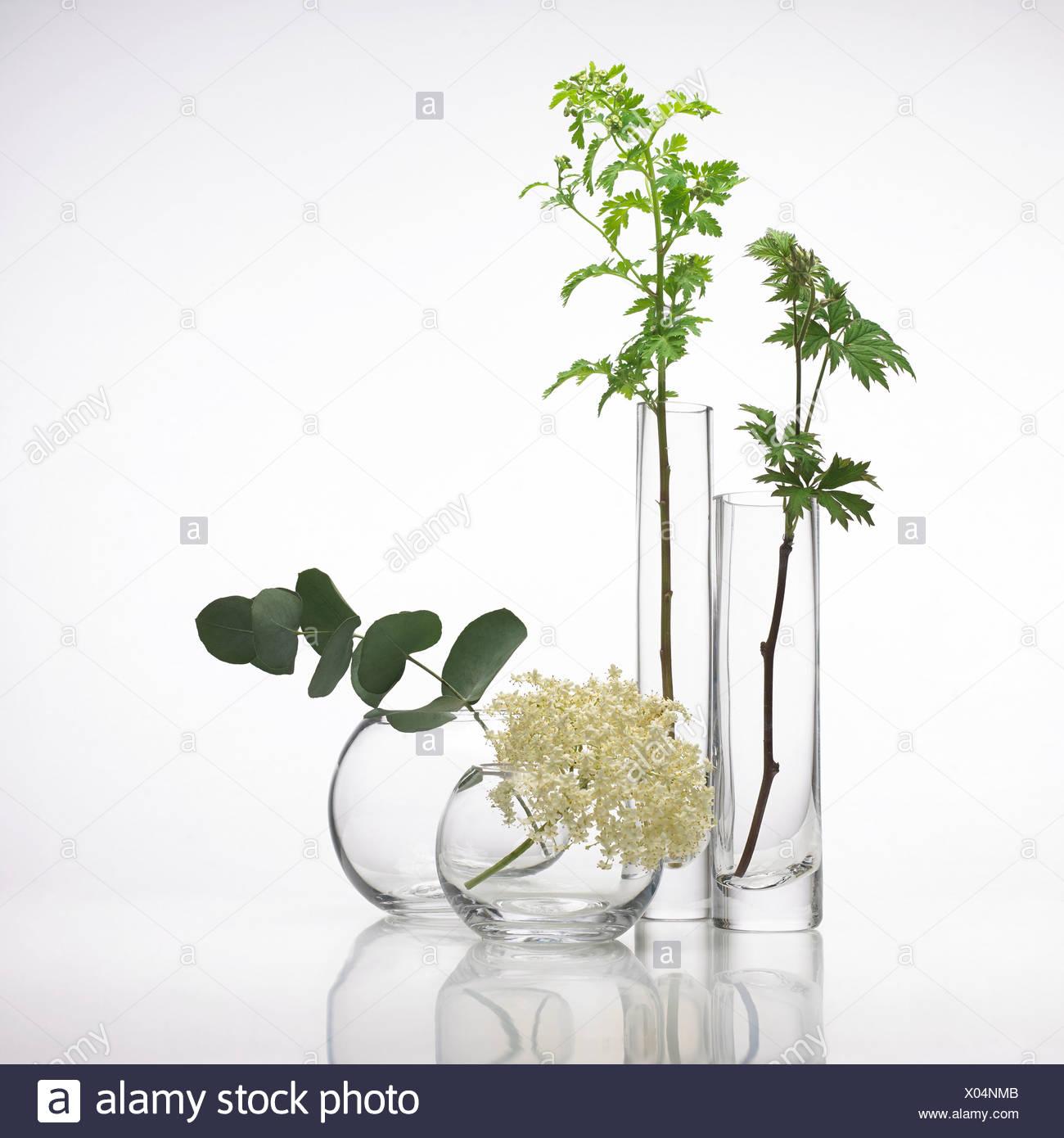 Plantes médicinales, conceptual image Photo Stock