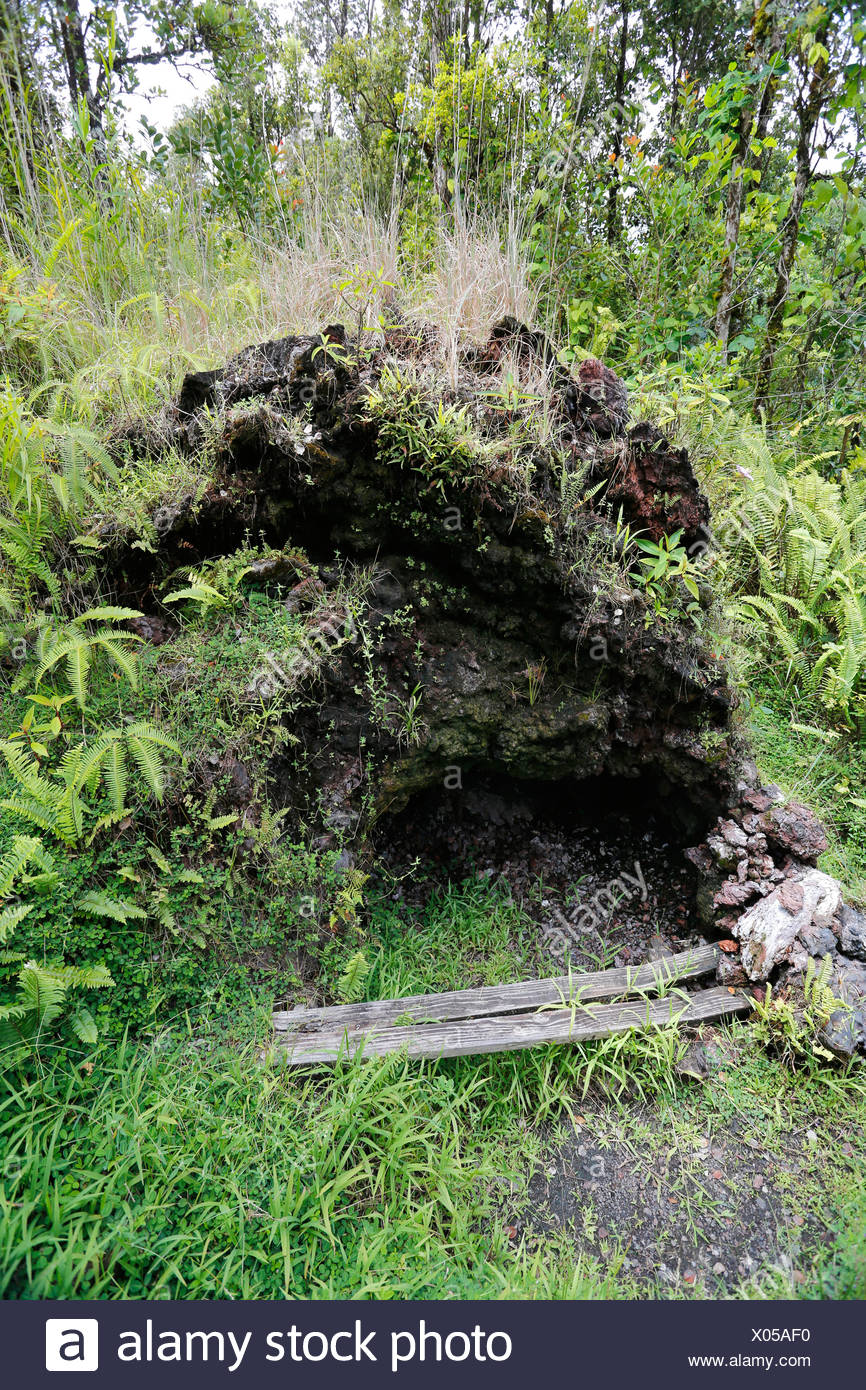 Les Cheminées à vapeur, les trous dans la zone de rift de l'est au service que d'un sauna, la Puna, grande île de Hawaii, USA Photo Stock