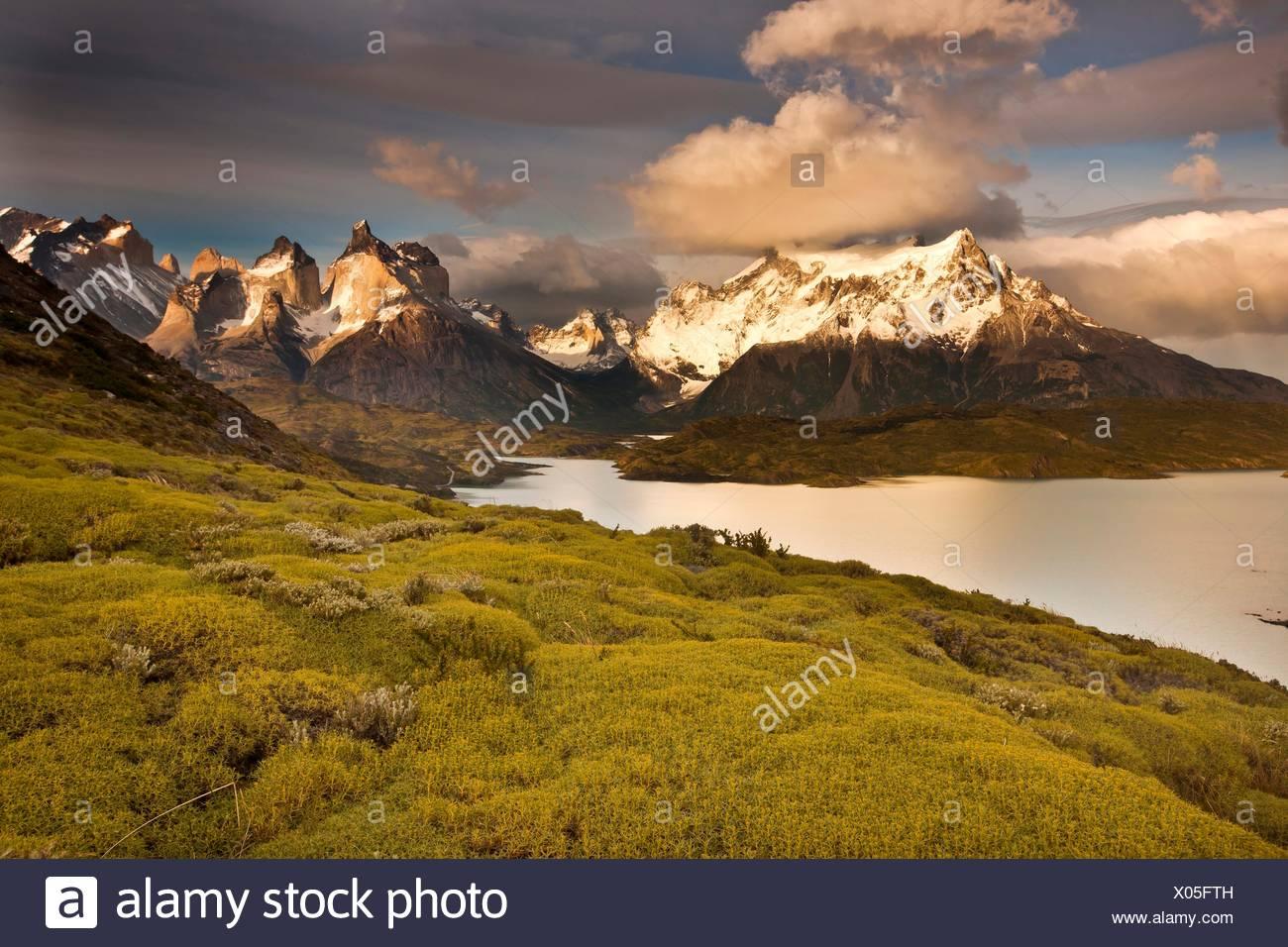 """Sommets Cuernos del Paine après l'aube, atabarrosa """"épineuse"""" Mulinum spinosum en fleur, Parque Nacional Torres del Paine, Photo Stock"""