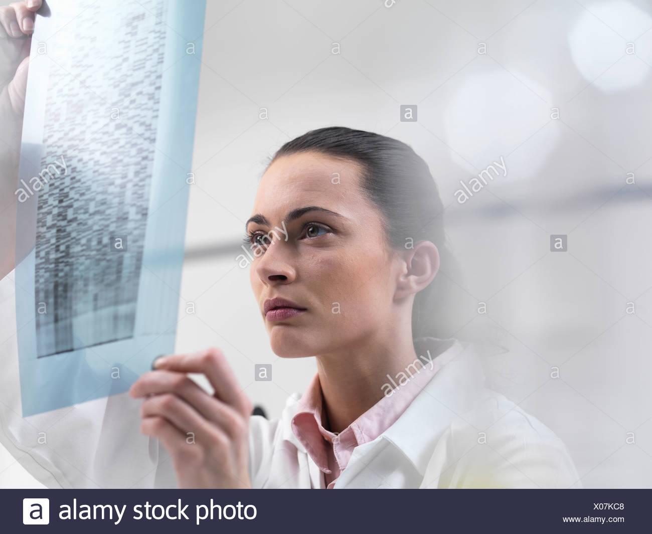 Scientist examining DNA sequencing gel Photo Stock
