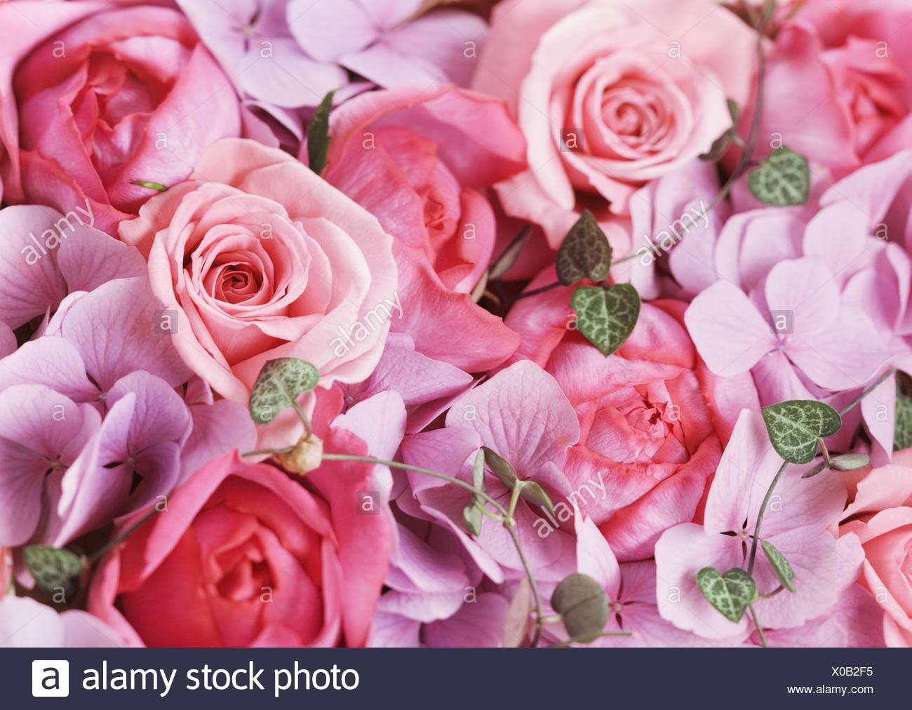 Rose et de l'hortensia Photo Stock