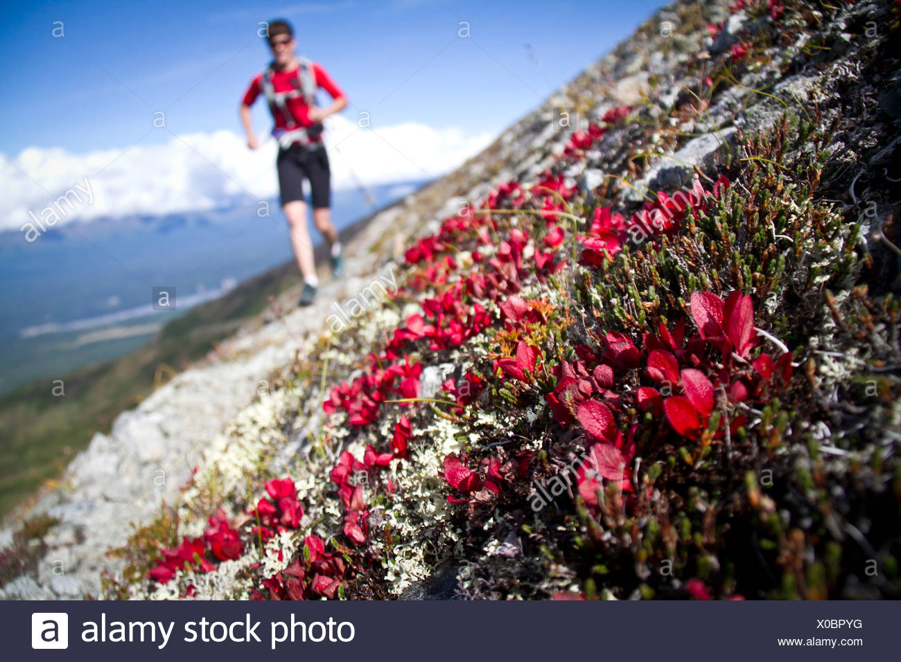 Trail Running femme entre Lazy Mountain and Matanuska, crête des montagnes Chugach, Southcentral Alaska, automne Photo Stock