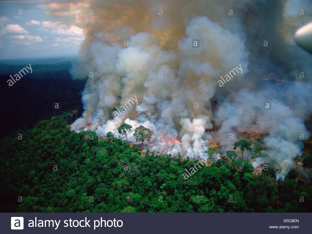Forêt amazonienne en feu. Banque D'Images