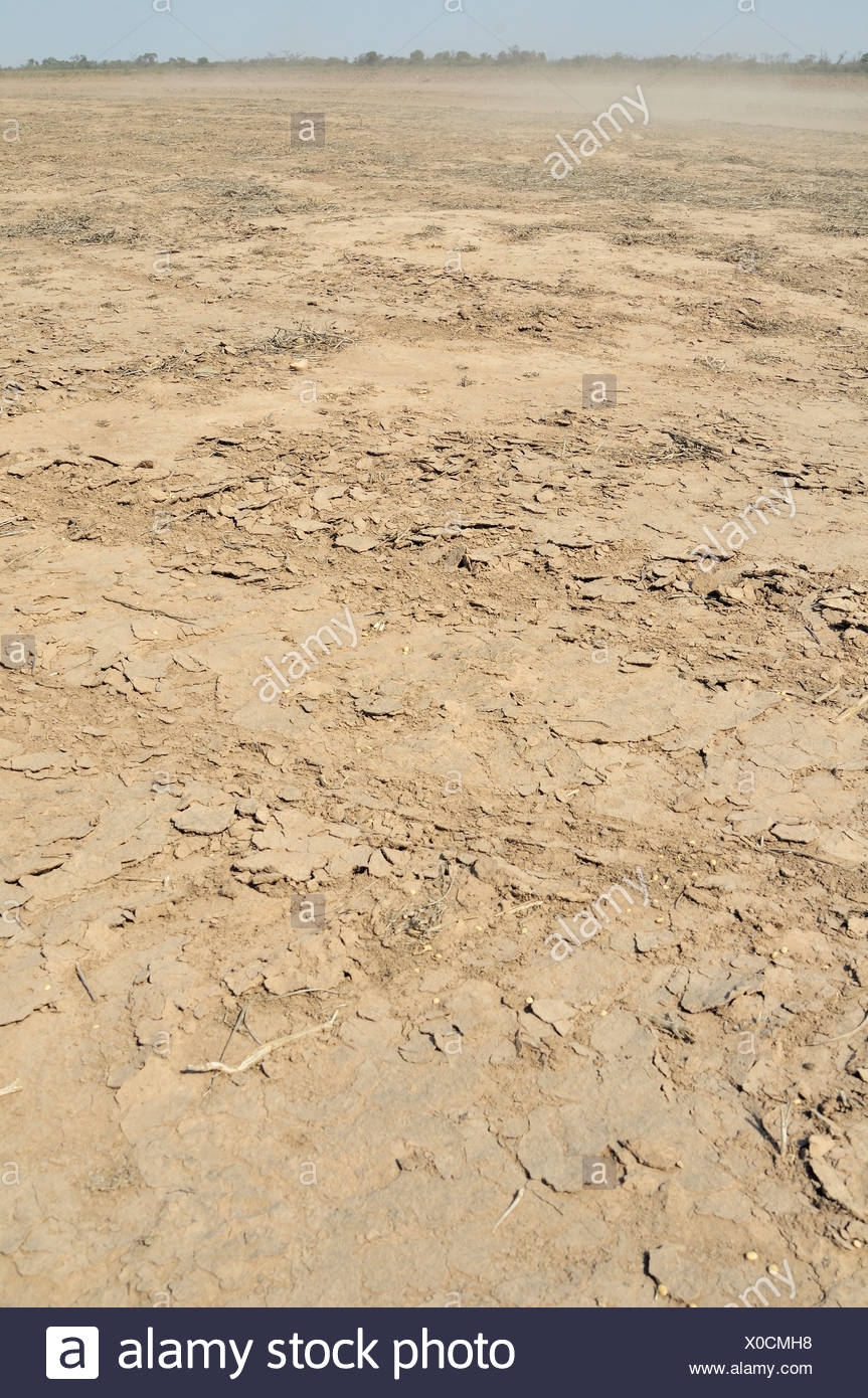 L'érosion, les sols riches en éléments nutritifs sont emportées par le vent à partir de zones défrichées, Gran Chaco la région, la province, l'Argentine Photo Stock
