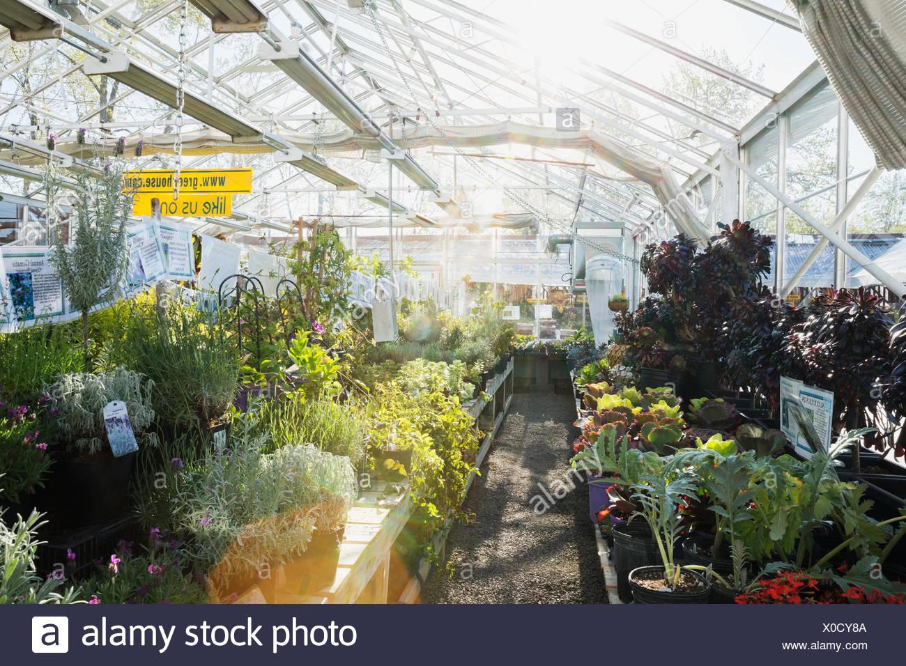 Fleurs et plantes en serre ensoleillée Photo Stock