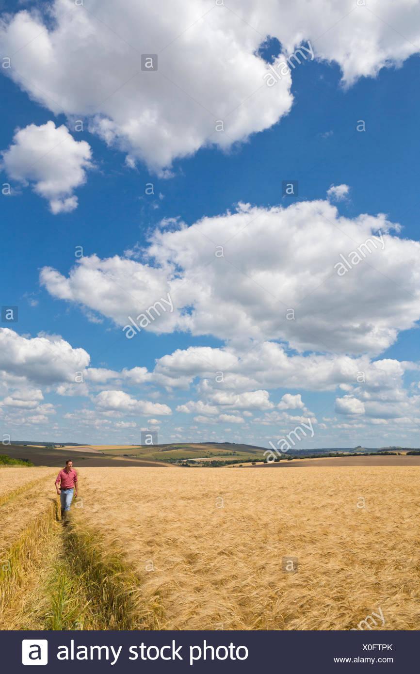 Farmer walking through rural ensoleillée en été sur le terrain de la récolte d'orge Photo Stock