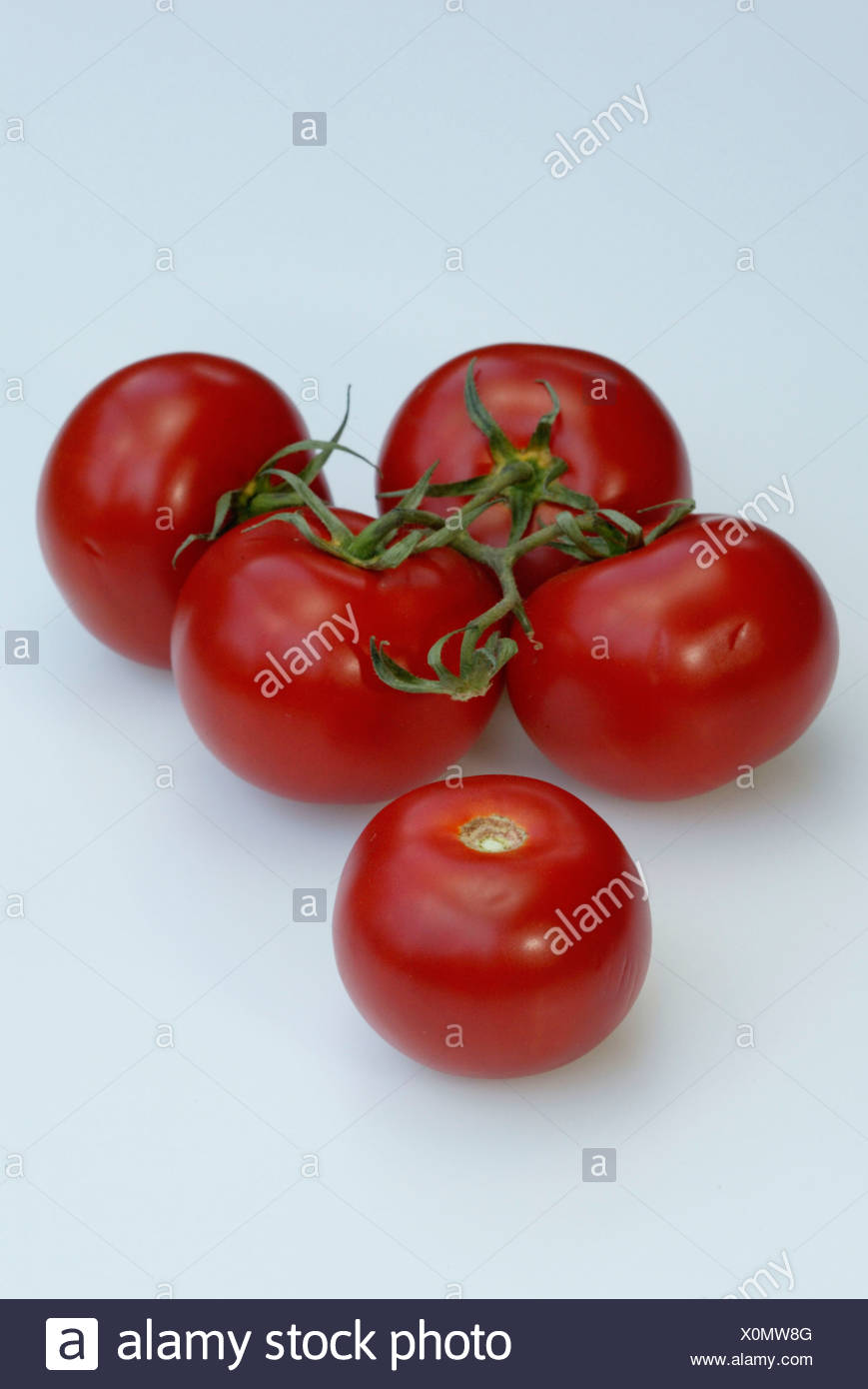 Tomate / Tomate Photo Stock