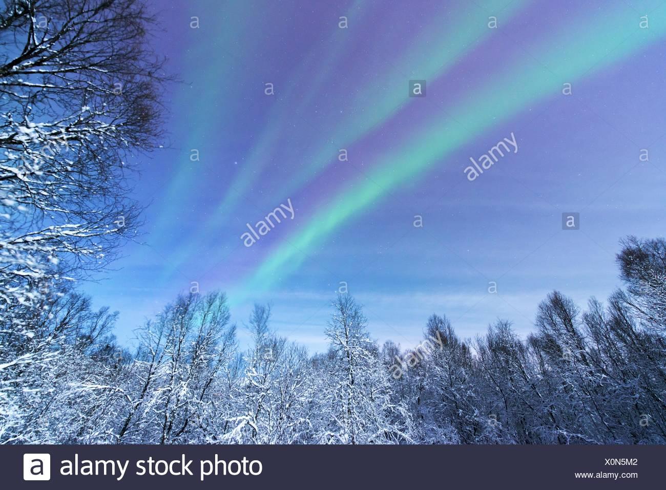 Au-dessus d'aurora la forêt enneigée paysages, Norvège, Troms, Tromsoe Photo Stock