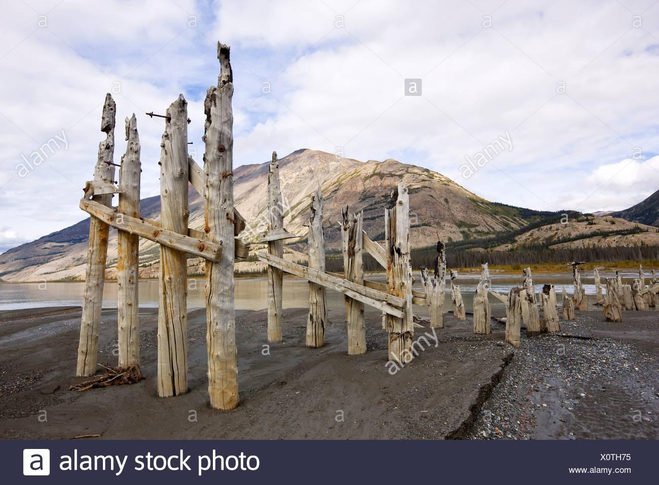 Pillings du pont de la rivière Slims original avec des moutons à l'arrière-plan, la montagne du parc national Kluane, Yukon, Canada. Photo Stock