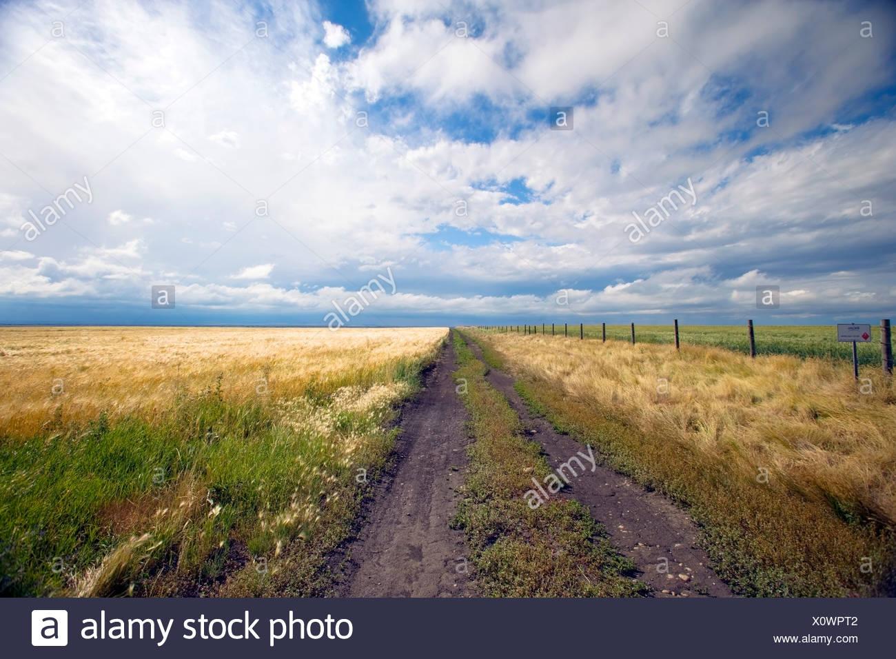 Storm breaking up plus de Ridge Road 221, l'Alberta, au Canada, les céréales, l'agriculture, la météo Photo Stock