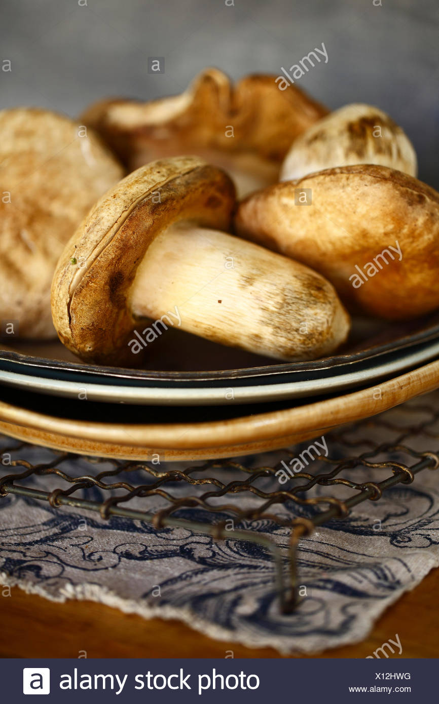 Champignons crus sur une plaque Photo Stock
