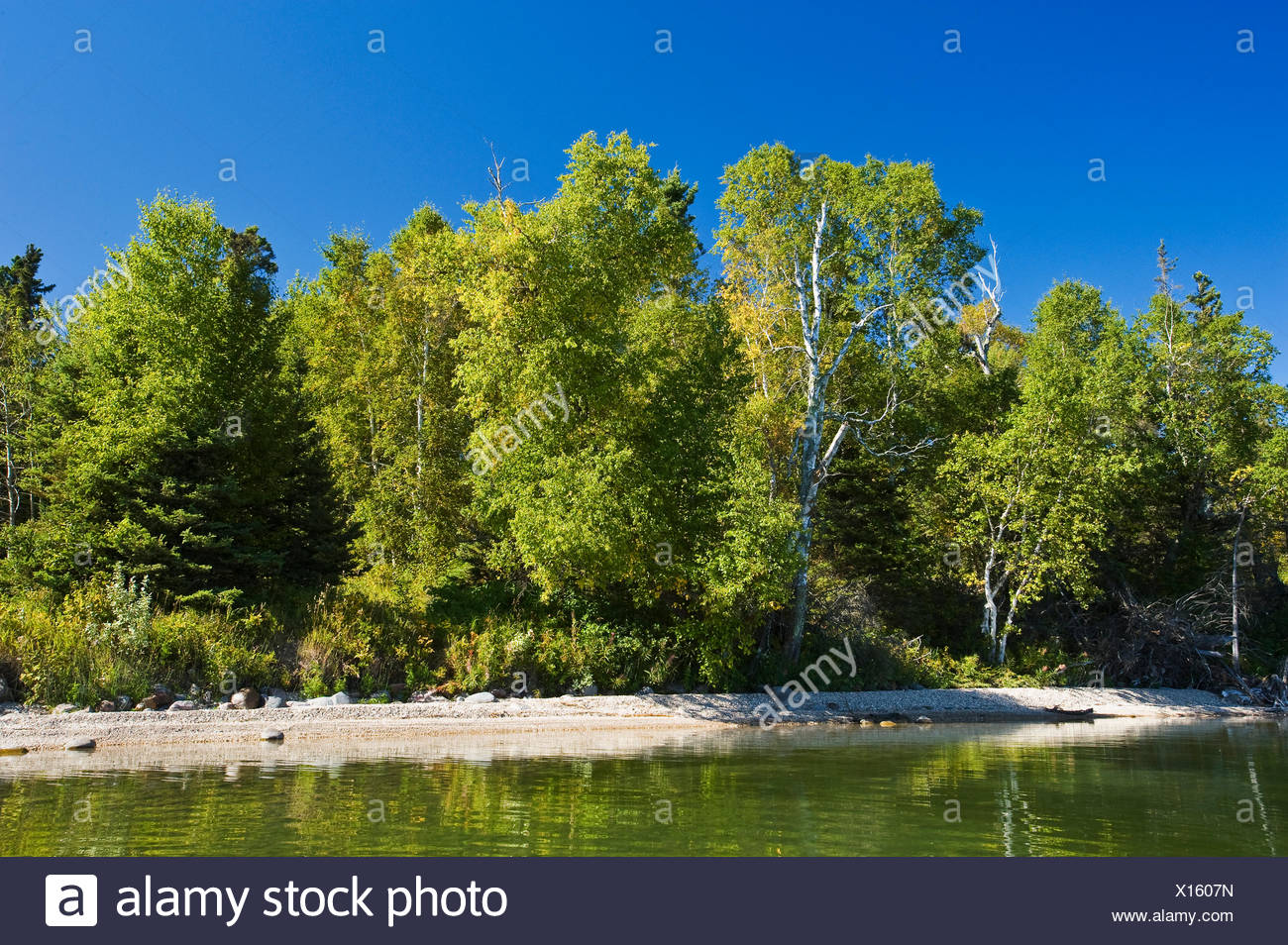 Clear Lake , le parc national de Riding Mountain, Manitoba, Canada Photo Stock