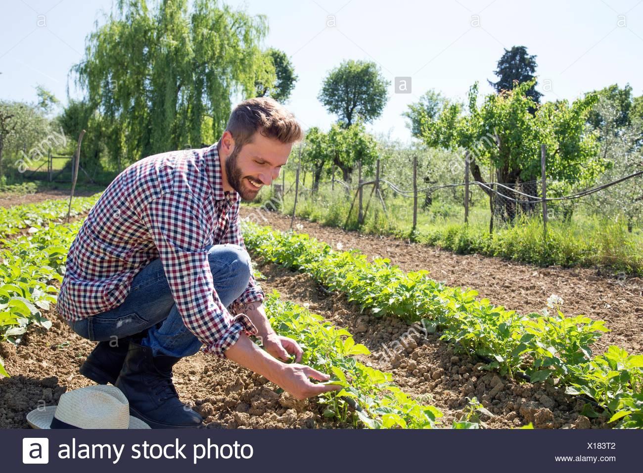 Jeune homme accroupi dans le champ qui tend à la tomate Photo Stock