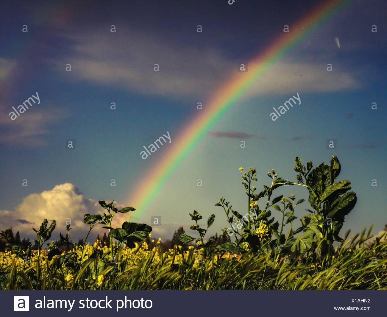 Vue sur Arc-en-ciel sur paysage de campagne Photo Stock
