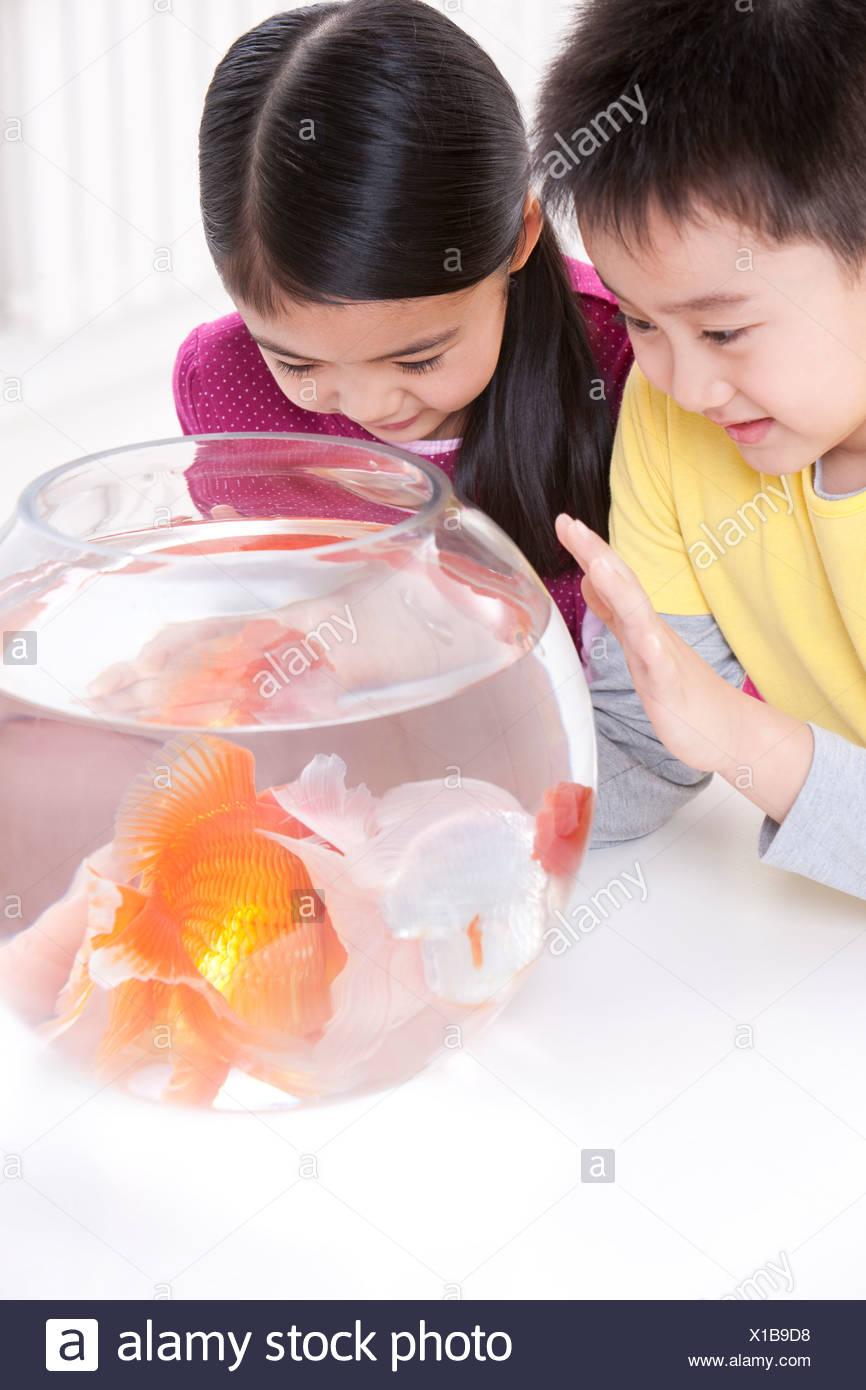 Les enfants s'amusant avec goldfishes Photo Stock