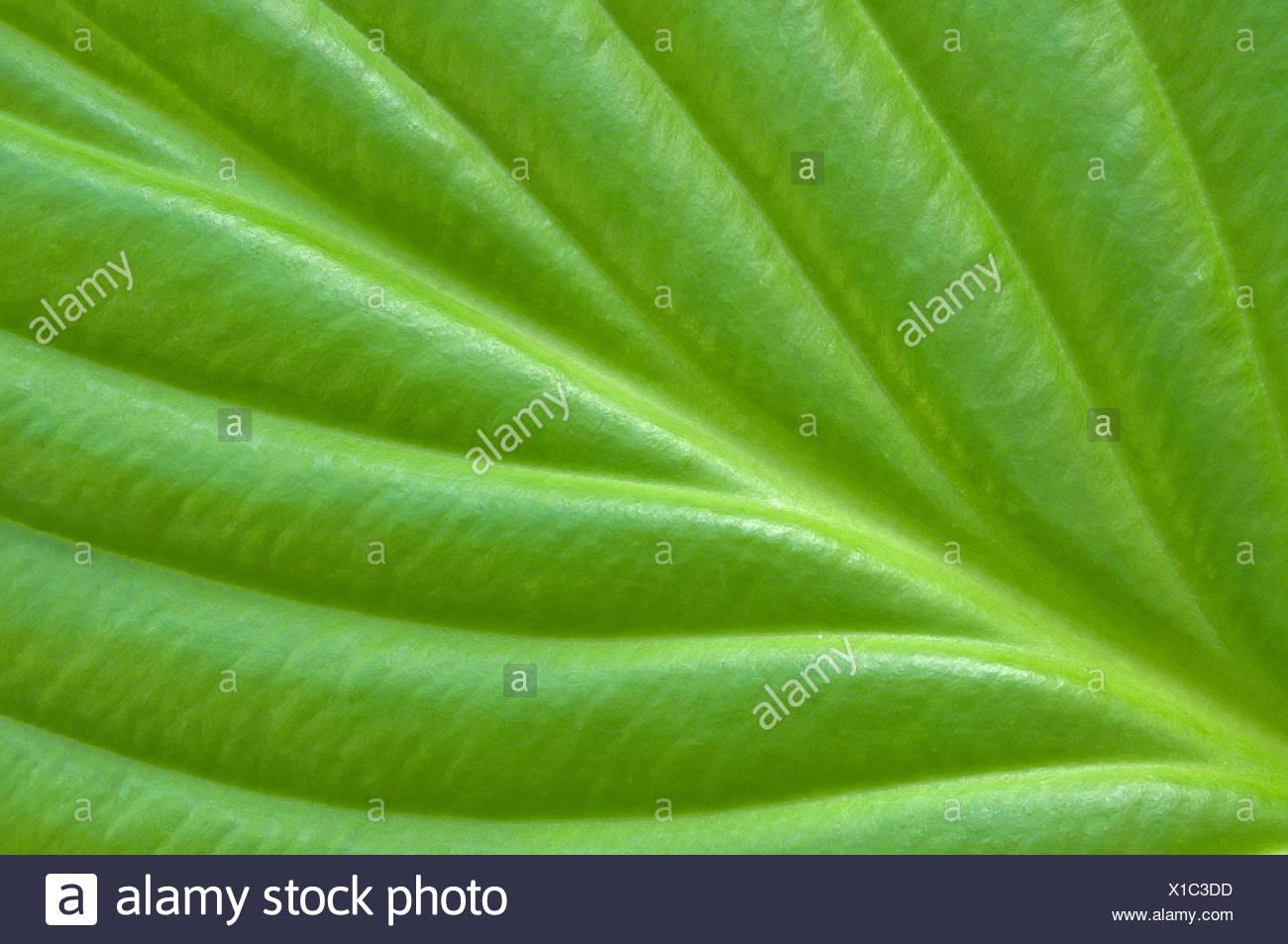 Tissu de fond vert. Photo Stock