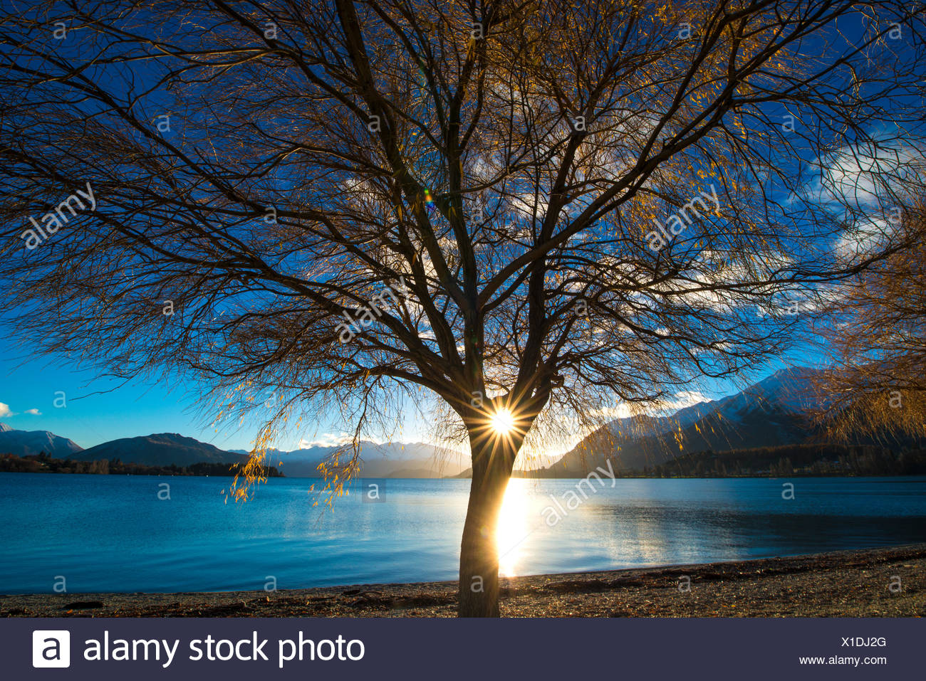 La NOUVELLE ZELANDE, le lac Wanaka, Sun shining through tree Photo Stock