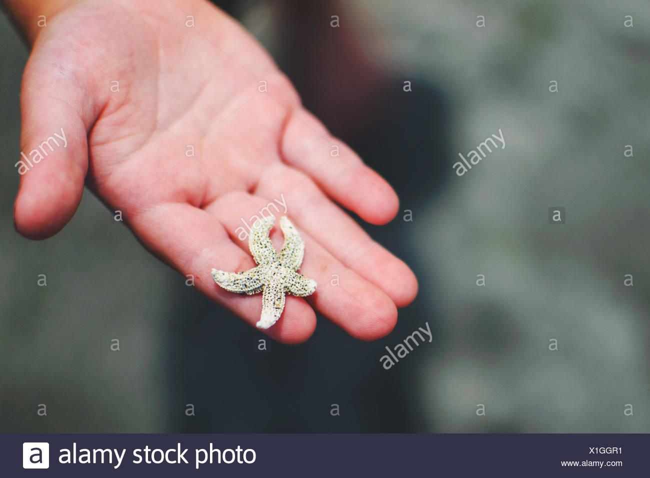 La main de l'enfant (2-3) holding tiny star fish Photo Stock