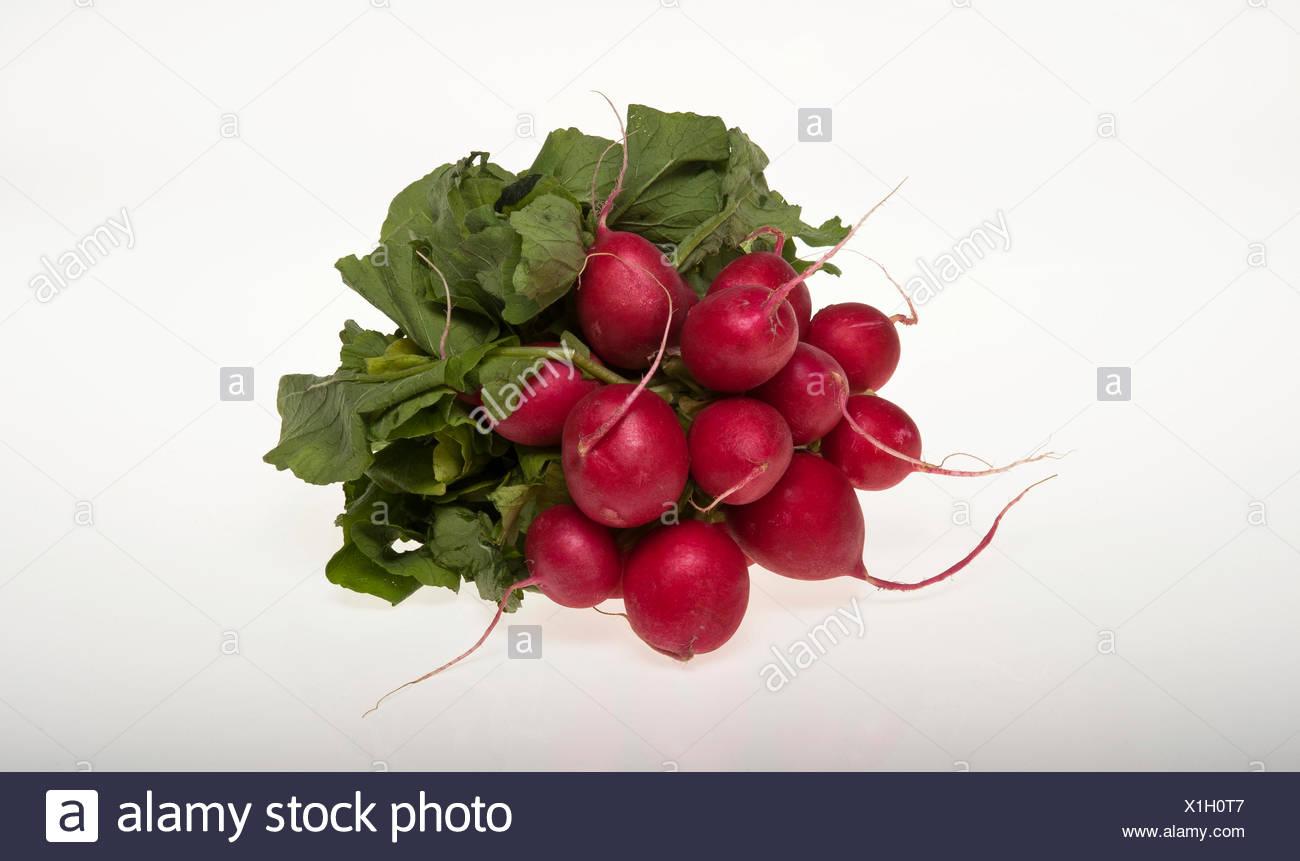 Les radis, photographie Photo Stock