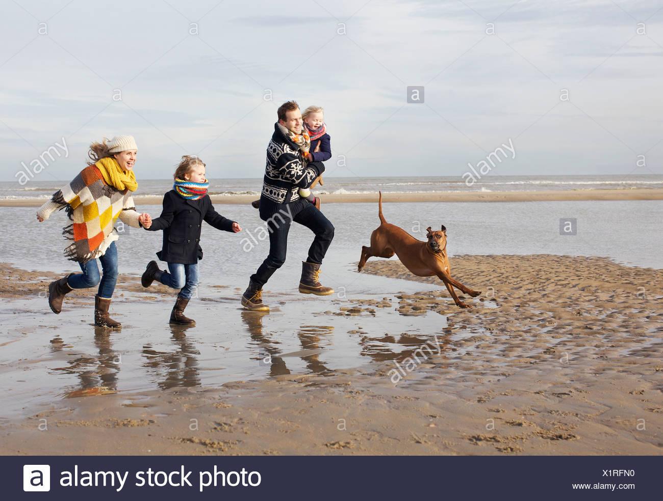 Mid adult parents avec son fils, sa fille et le chien qui court sur la plage, Bloemendaal aan Zee, Pays-Bas Banque D'Images