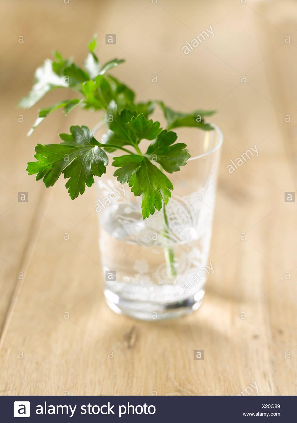 Dans l'eau de persil Petroselinum crispum (verre) Photo Stock
