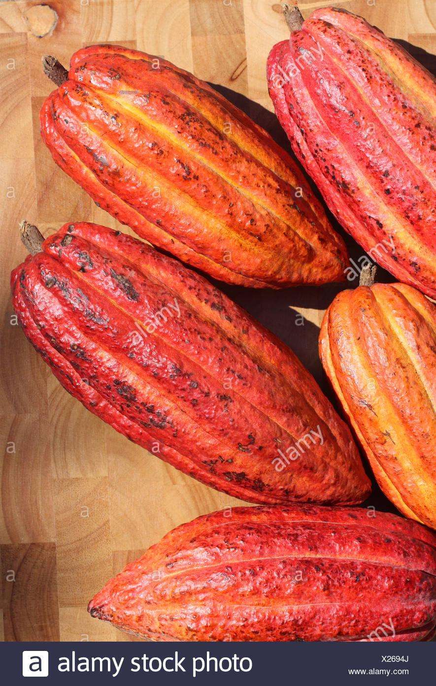 La Grenade. Close-up of ripe Cacao (Cocoa) fruits. Photo Stock
