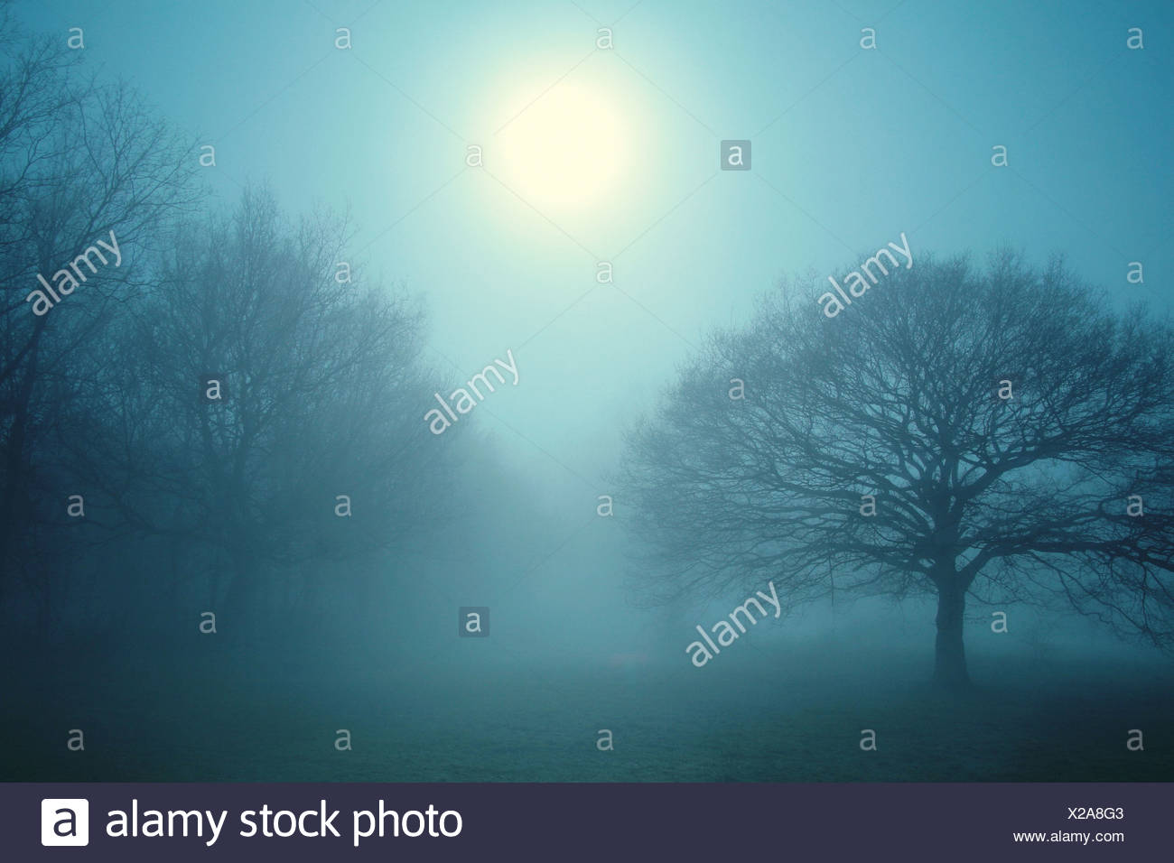 Arbres dans la brume Photo Stock