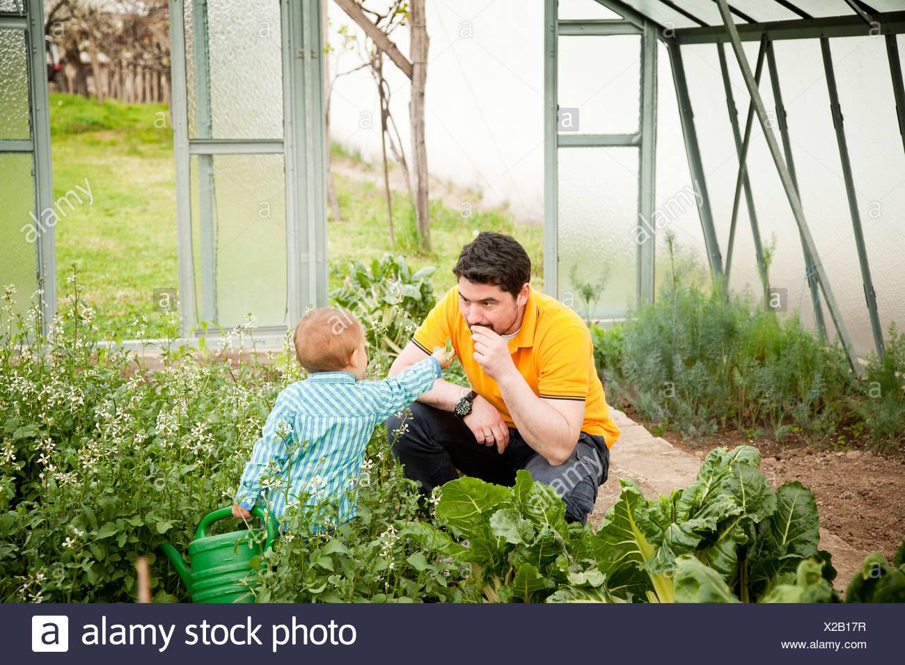 Père et fils en potager, Autriche Photo Stock