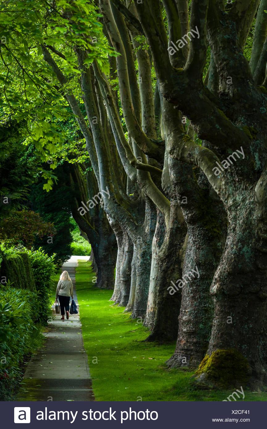 Promenade bordée d'arbres, Kerrisdale Banque D'Images