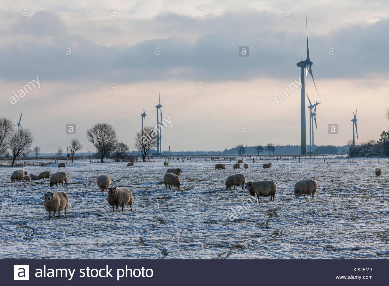 Paysage d'hiver, place à l'énergie éolienne à côté de Dornum Photo Stock