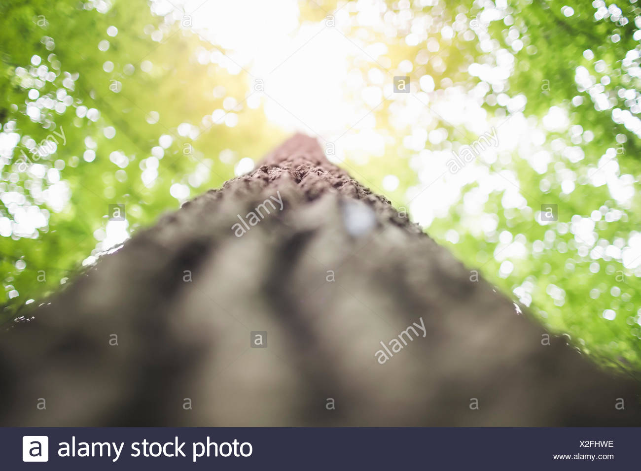 Tronc d'arbre, low angle Photo Stock