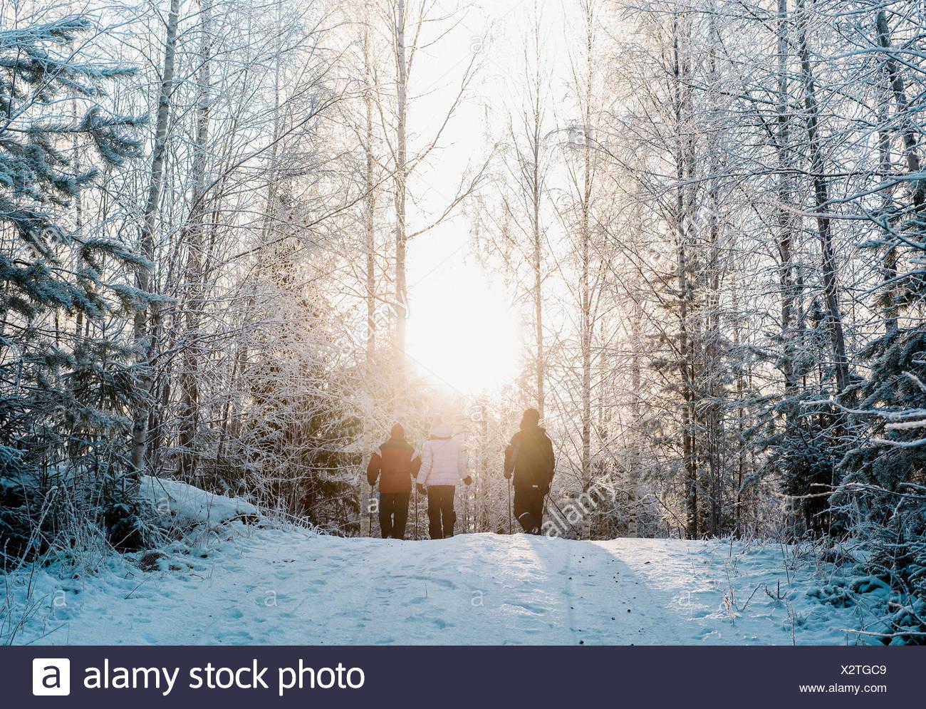 Trois personnes marche nordique dans la forêt couverte de neige Photo Stock
