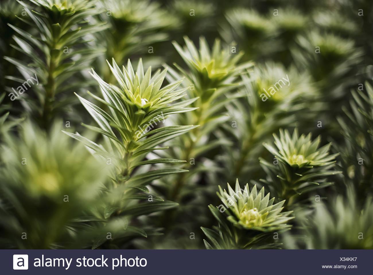 Woodstock, New York USA Organic plantes poussent dans la croissance des émissions. Photo Stock