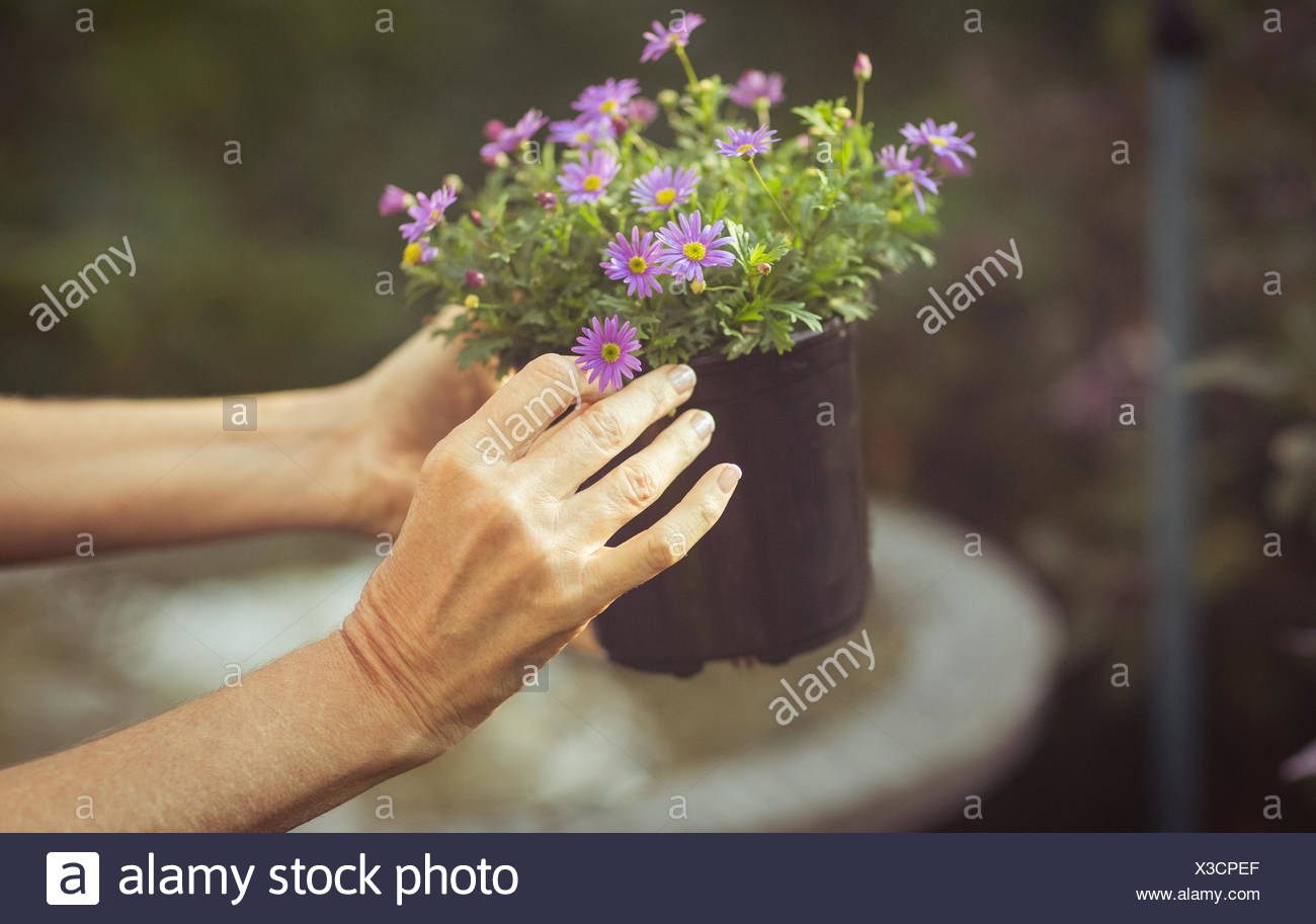 Portrait de jardinier holding potted flowers Photo Stock