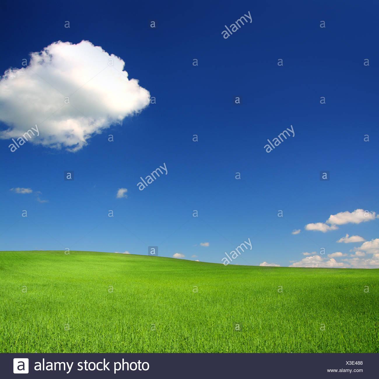 Green hill avec le blé sous ciel bleu Photo Stock
