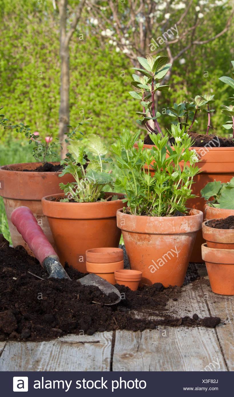 Planter Menthe En Pot feuille, feuilles, jardin, printemps, menthe, pelle, pot