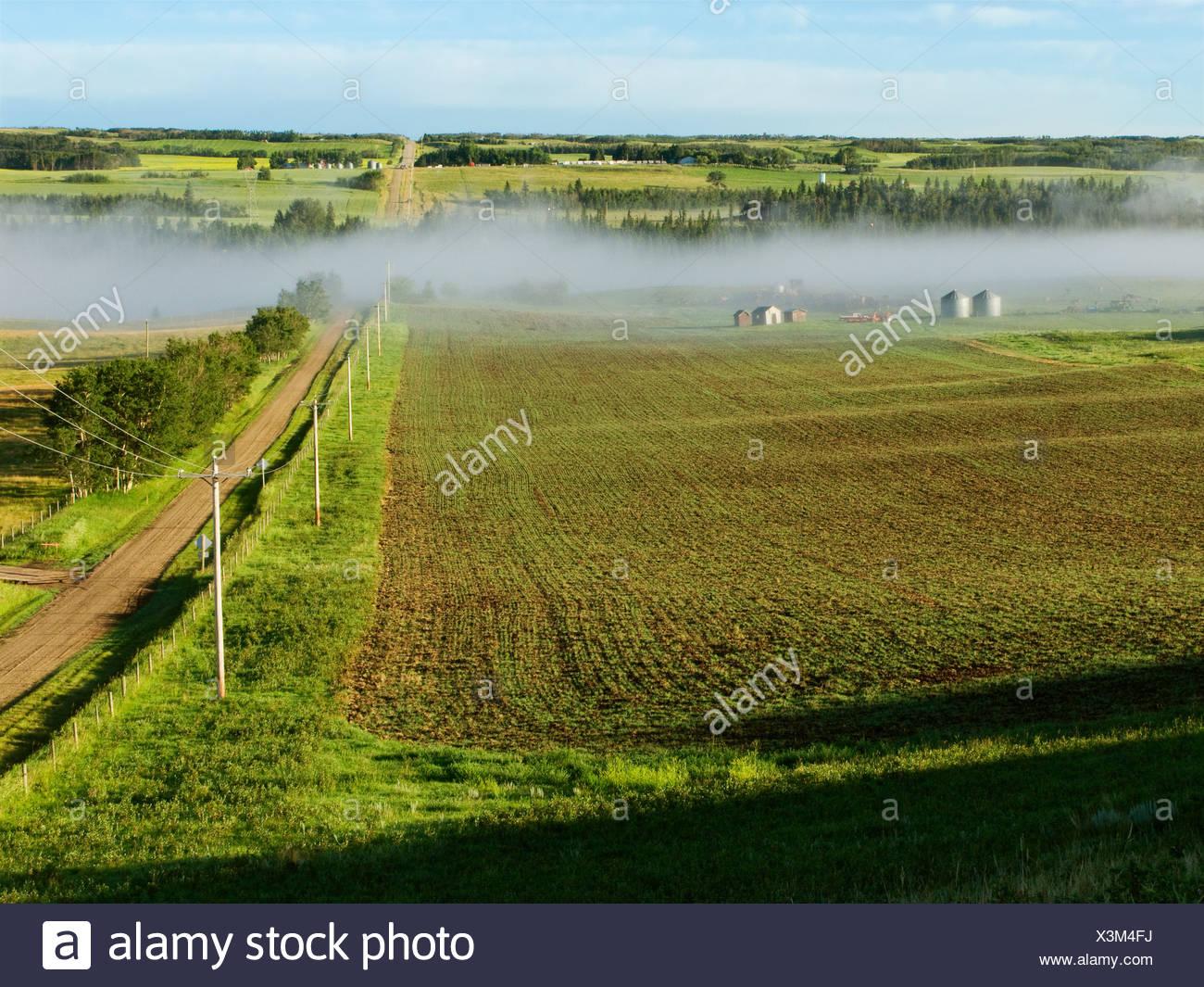 Un pays de gravier route mène à la rivière Red Deer et un début de la croissance des grains de céréales sur le champ gauche / de l'Alberta, au Canada. Photo Stock