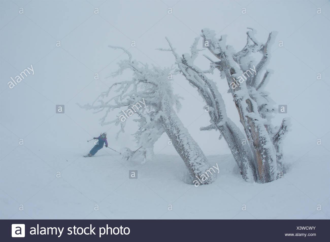 Une fille de l'adolescence du ski dans des conditions de voile blanc, brumeux près de rime couverts d'arbres. Photo Stock