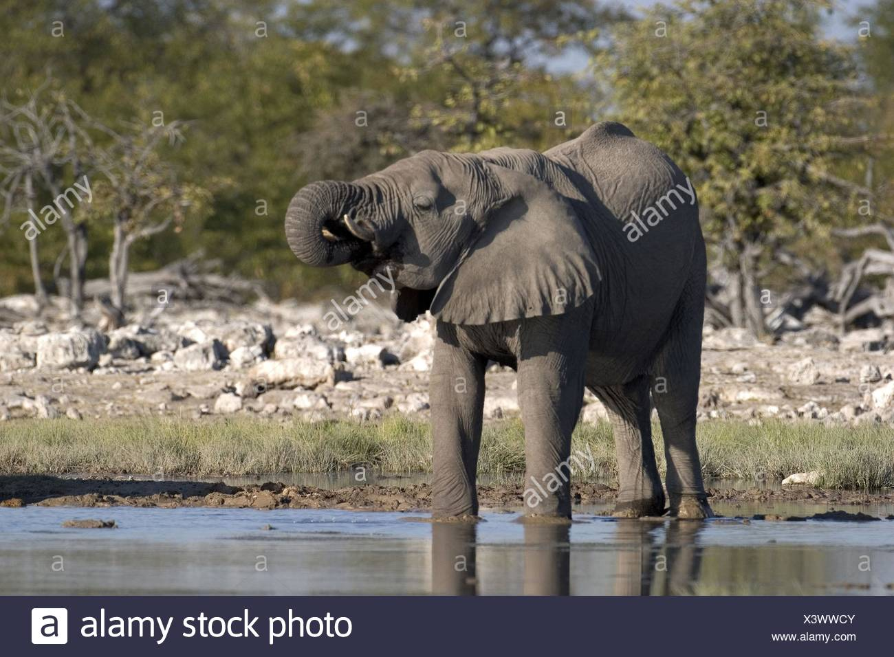 éléphant Photo Stock