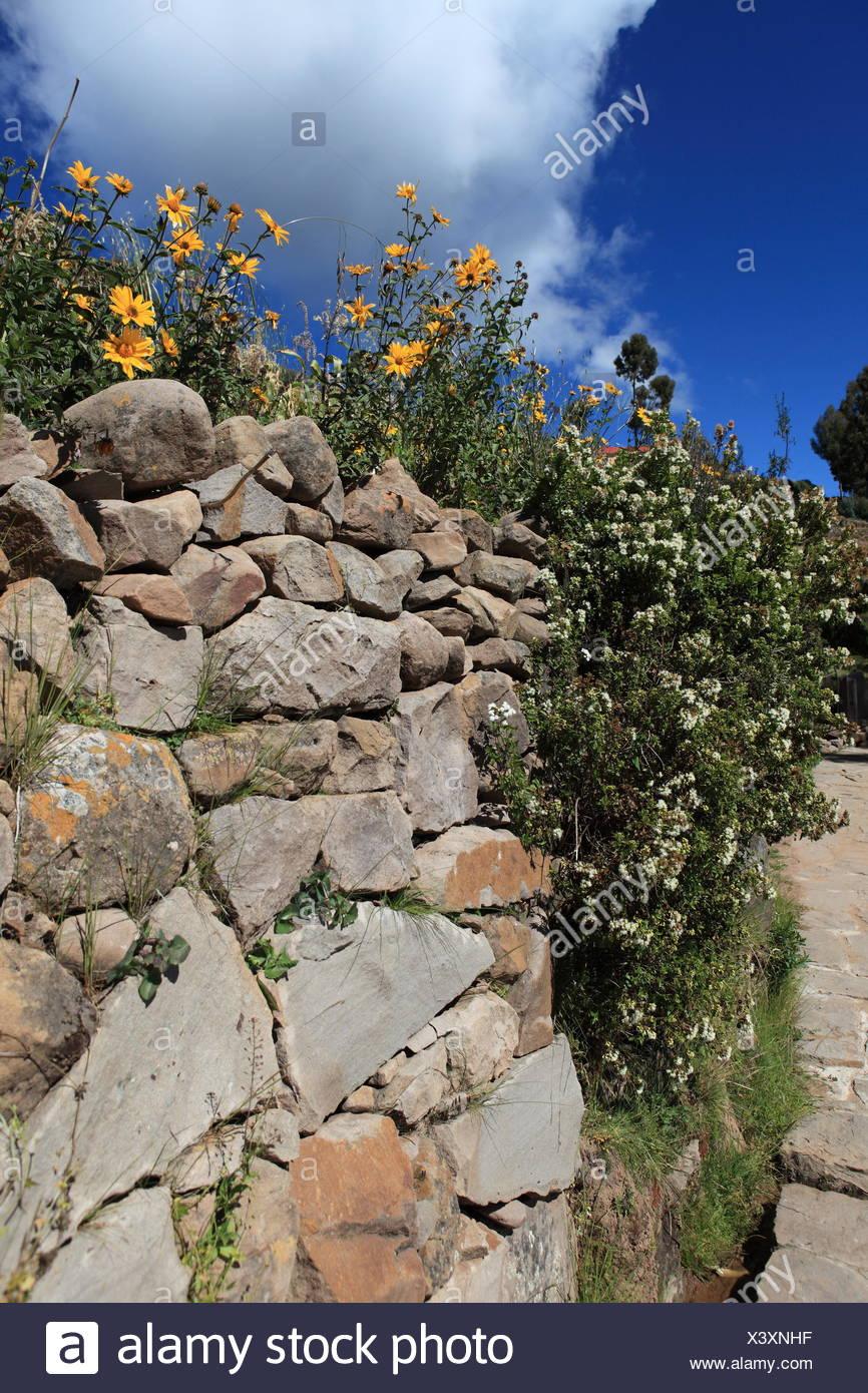 Jardin, fleur, fleurs, plantes, mur, Stonewall, jardins, rocaille ...