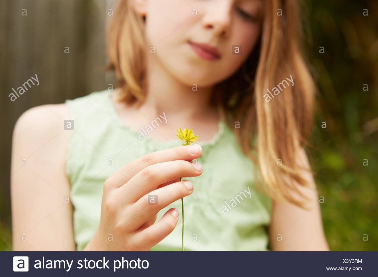 Cropped shot of girl holding avec fleurs de pissenlit Photo Stock