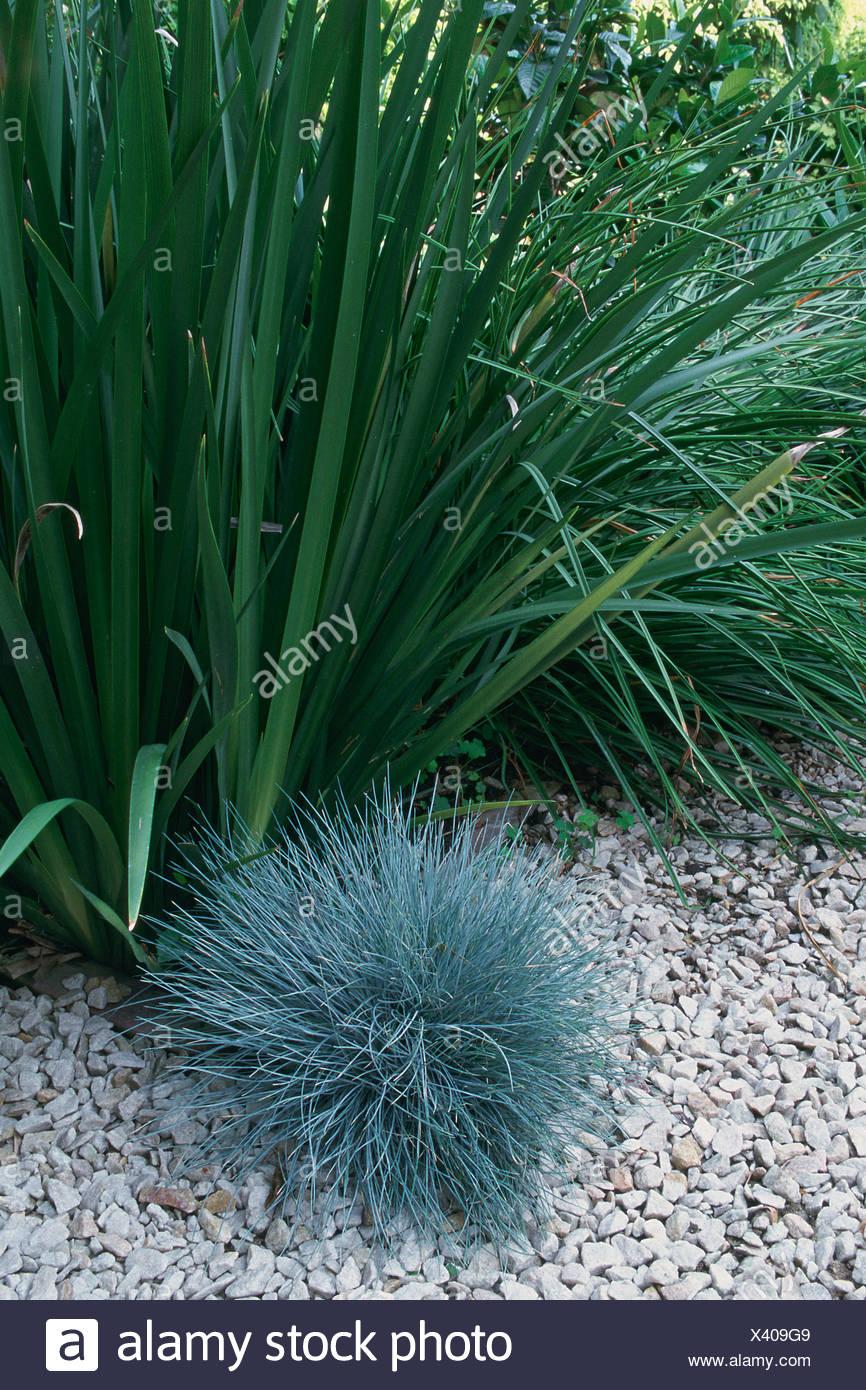 Jardin plante formant un duvet d'herbe avec des pierres longues feuilles Photo Stock