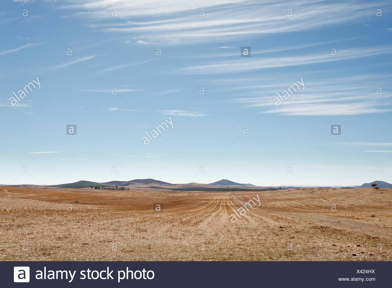 Les cirrus au-dessus de la vaste plaine de l'Alentejo. Photo Stock