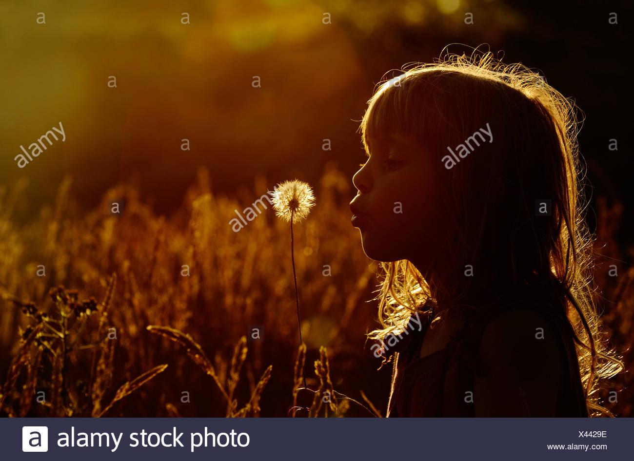 Jeune fille jouant dans le pré à la fin de l'été - Parution du modèle de Norfolk Photo Stock