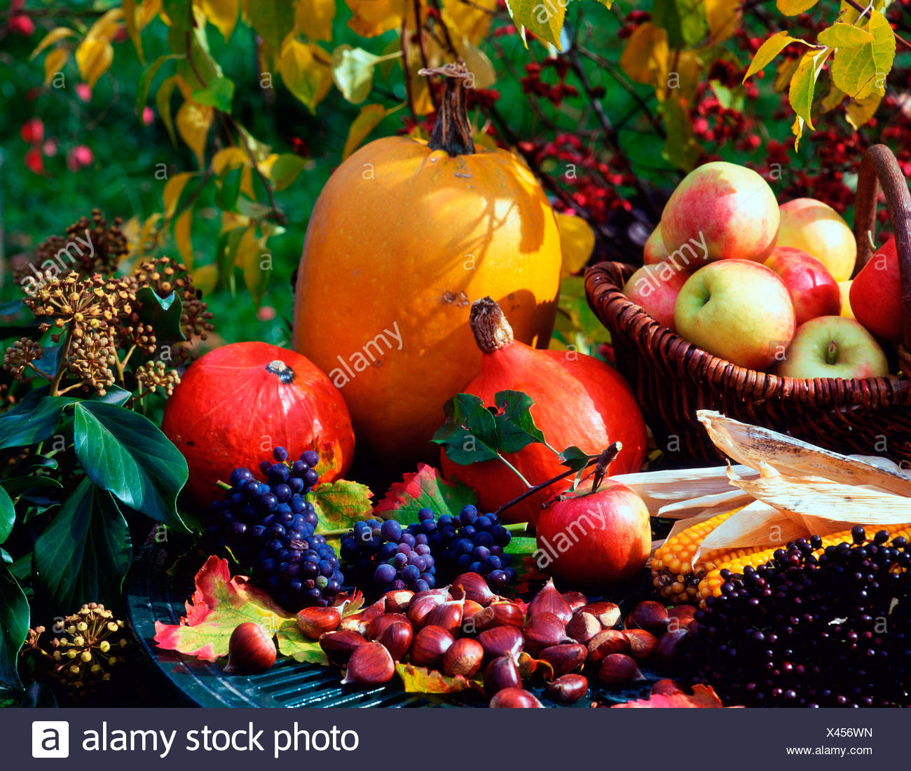La vie encore d'automne Photo Stock