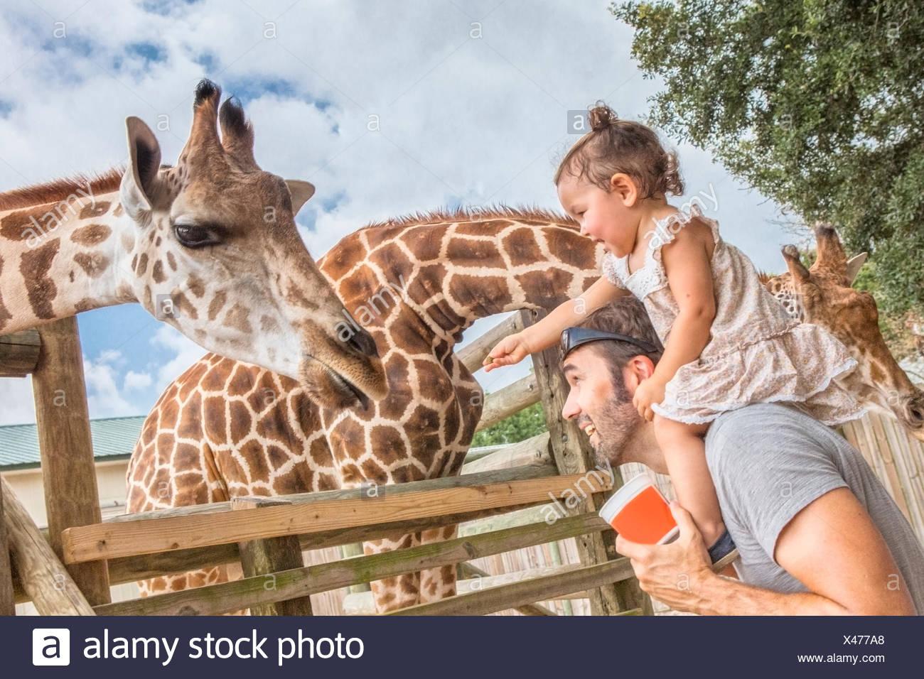 Baby girl sur les épaules des pères girafes au zoo d'alimentation Photo Stock