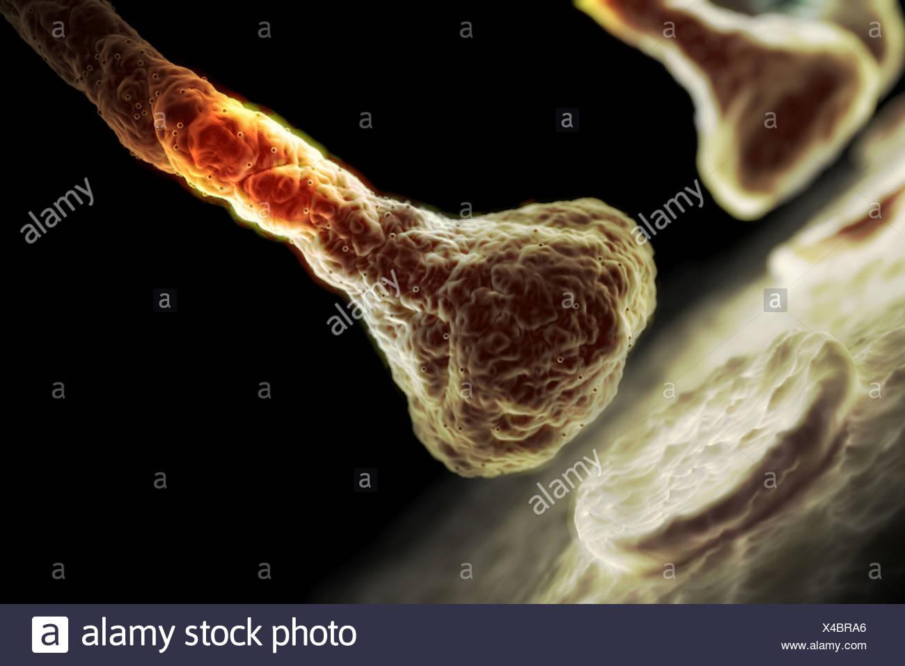 Style microscopiques visualisation d'un synapse. Photo Stock