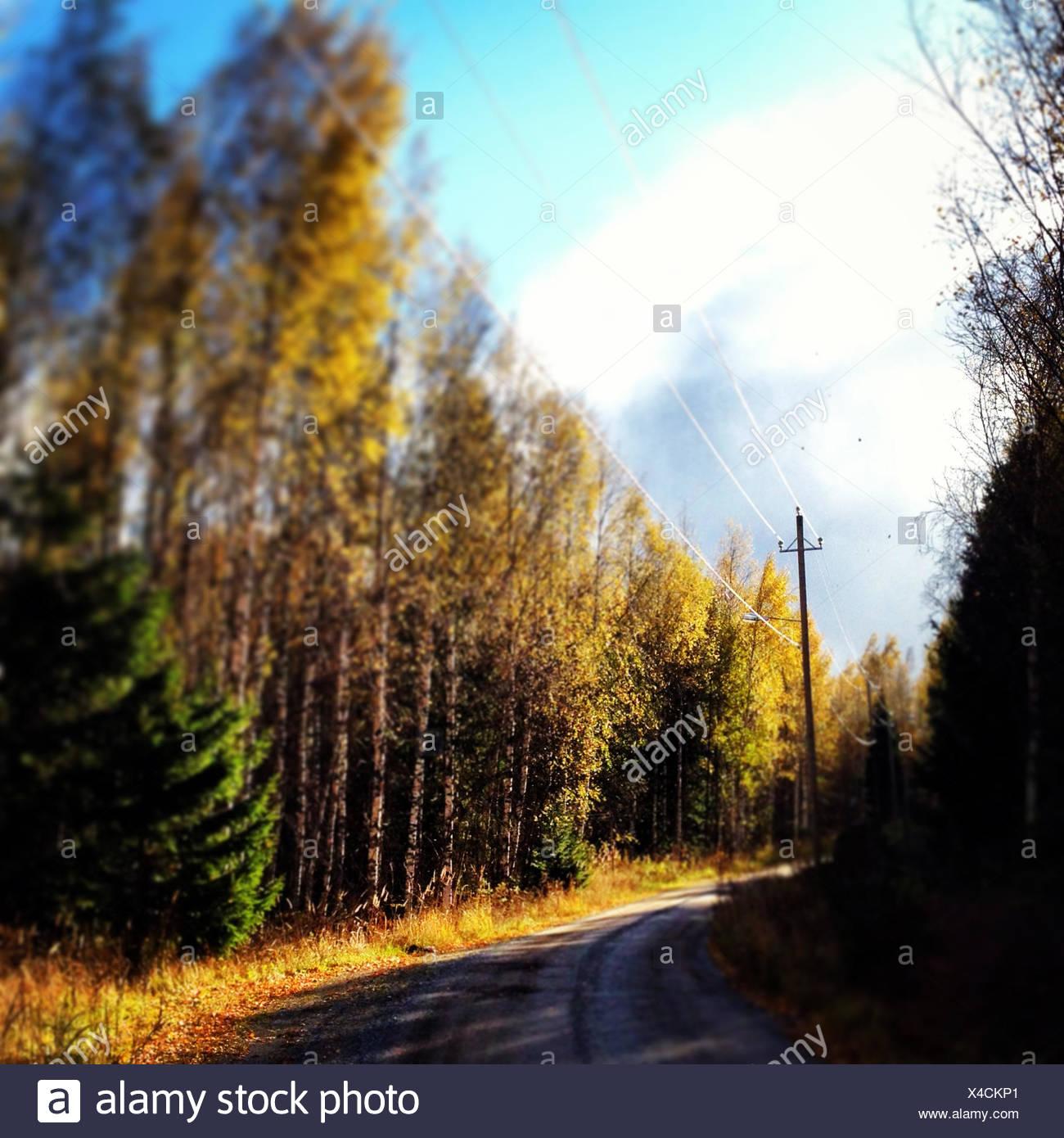 Route de campagne à travers les bois Photo Stock