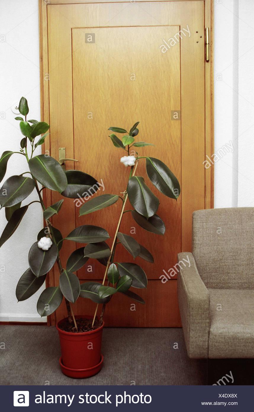 l'espace salon, canapé, détail, porte, plante d'intérieur, des salon